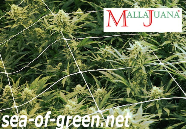 mallajuana tutoring crops in the sog method